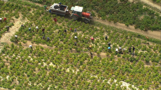 aerial ws zi pan grape pickers harvesting grapes in beaujolais vineyards near beaujeu / rhone, france - vine stock videos and b-roll footage