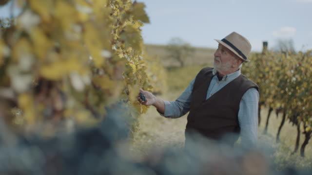 grape tasting - red grape stock videos & royalty-free footage