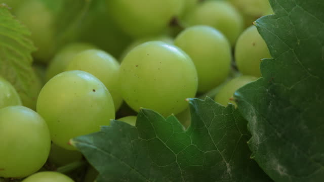 grapes 4k - grape leaf stock videos and b-roll footage
