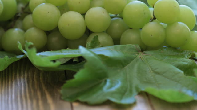 vídeos de stock, filmes e b-roll de uvas 4k - grape leaf