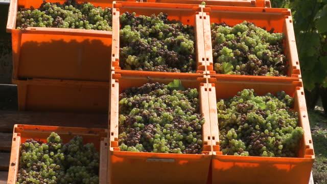 vidéos et rushes de cu  grapes basket in truck at vineyard / serrig, rhineland-palatinate, germany  - véhicule utilitaire léger