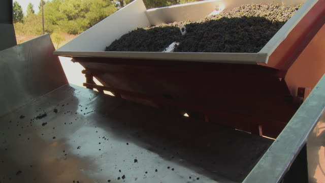 cu pan grapes being unloaded onto scale, franschhoek, western cape, south africa - franschhoek stock videos and b-roll footage
