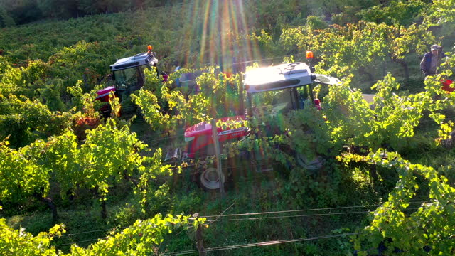 grapes harvest in chianti wine region, tuscany, italy - agricultural equipment stock videos & royalty-free footage