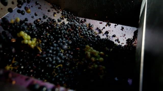 vídeos y material grabado en eventos de stock de uvas de recolección en el viñedo: máquina de planchado - uva