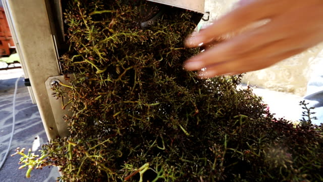 grapes harvesting in a vineyard: pressing machine - grape stock videos & royalty-free footage