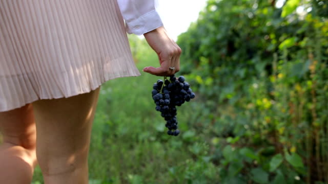 grapes in my hand - vineyard stock videos & royalty-free footage
