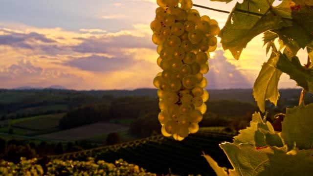 vídeos de stock, filmes e b-roll de cu ds uvas no pôr-do-sol - raw footage