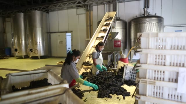 grapes move through a destemning and crushing machine at pb valley khao yai winery in pakchong thailand on monday feb 29 2016 shots shot of workers... - window frame stock videos and b-roll footage