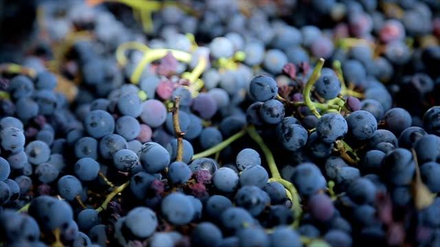 grapes.close up