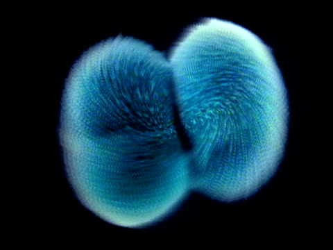 graphic of cells dividing to form to form zygote - dividing stock videos & royalty-free footage