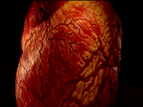 graphic of human heart with pumping vessels expanding and contracting as it beats - human heart stock videos & royalty-free footage