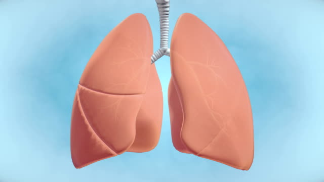 graphic visualisation of healthy human lungs - 4k resolution - biomedical illustration stock videos & royalty-free footage