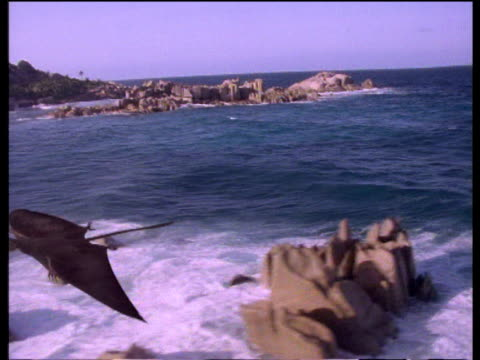 graphics: pan left as pterosaur glides over ancient sea and coast - dinosaur stock videos and b-roll footage