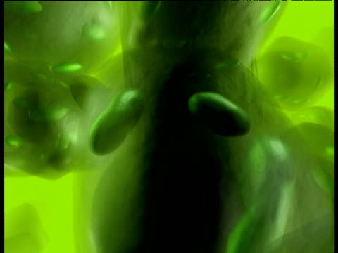 graphics: photosynthesis occurring inside plant leaf cells. - fotosintesi video stock e b–roll