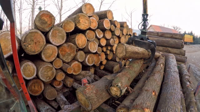 time-lapse grapple crane sorting logs at sawmill - construction machinery stock videos & royalty-free footage