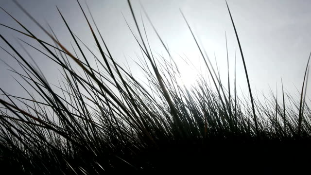 grass against light - marram grass stock videos and b-roll footage