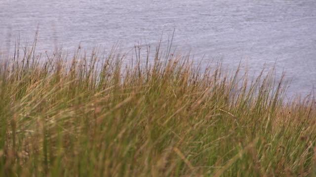 a grass and a lake shot - bacino idrico video stock e b–roll