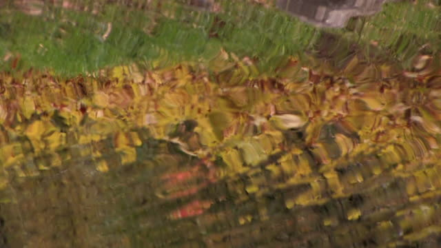 CU Grass and golden autumn leaves reflected in rippled water/ Canyon de Chelly National Monument, Arizona