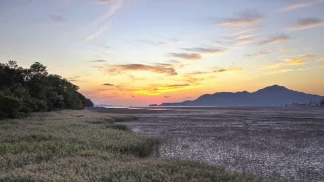 ws t/l grass and mud flat at ganghwado island / incheon, south korea - mud flat stock videos and b-roll footage