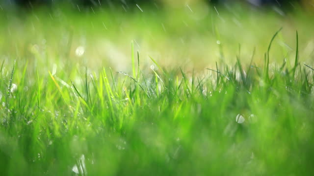 grass and rain - selective focus - spraying stock videos and b-roll footage