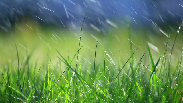 stockvideo's en b-roll-footage met grass and rain - selective focus - formele tuin