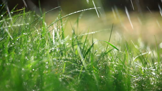 grass and rain - selective focus - golf grass stock videos & royalty-free footage