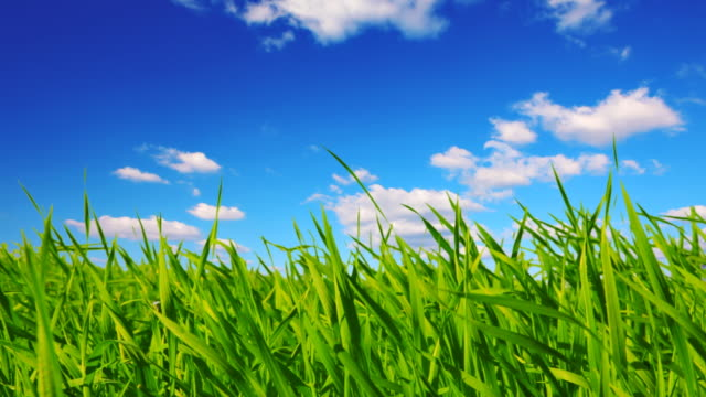 grass and sky - swaying stock videos & royalty-free footage