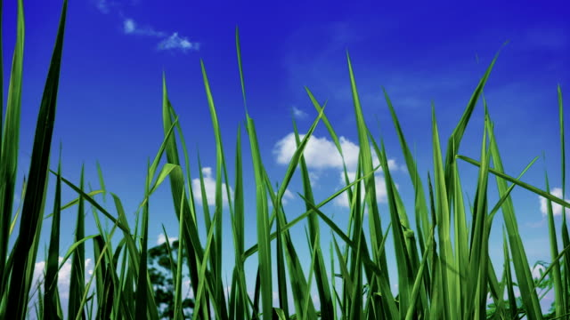 grass and sky - morning dew stock videos & royalty-free footage