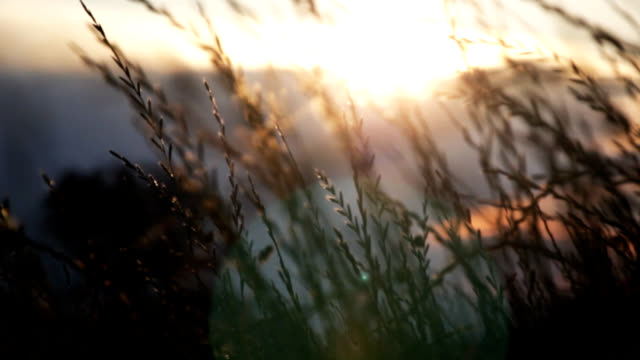 grass at dusk - simplicity stock videos & royalty-free footage