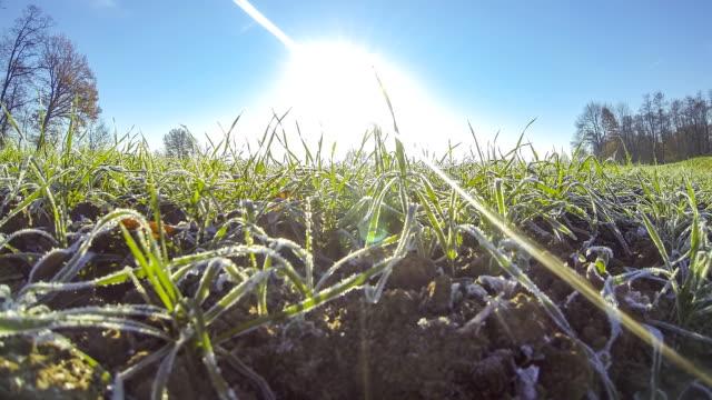 HD TIME-LAPSE: Grass Awakening In The Spring