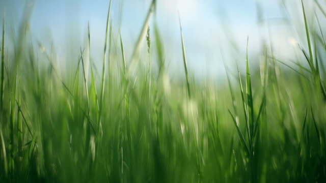Grass background, Panning Right