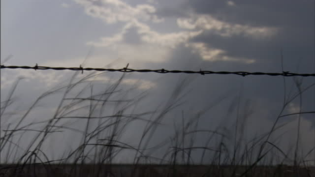 grass bends in a stiff breeze. - barbed wire stock videos & royalty-free footage