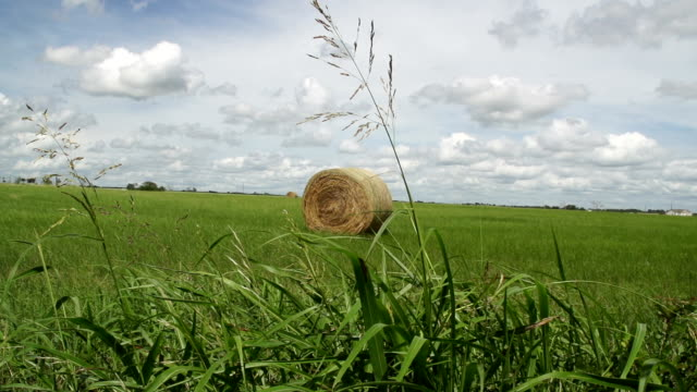 grass blowing in front of hay bale in meadow - hay isolated stock videos & royalty-free footage