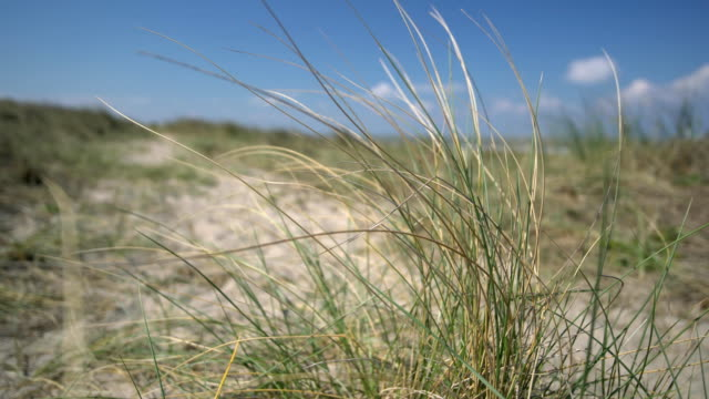 grass blowing in the wind - sea grass plant video stock e b–roll