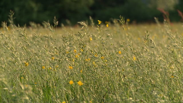 ws grass blowing in wind / vrhnika, slovenia - vrhnika stock videos & royalty-free footage