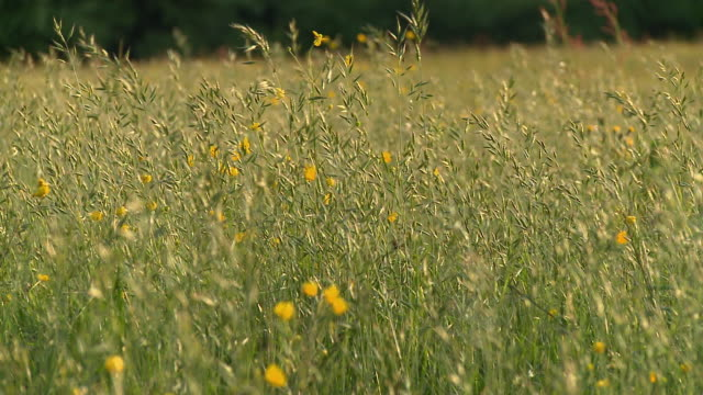 ws pan grass blowing in wind / vrhnika, slovenia - vrhnika stock videos & royalty-free footage