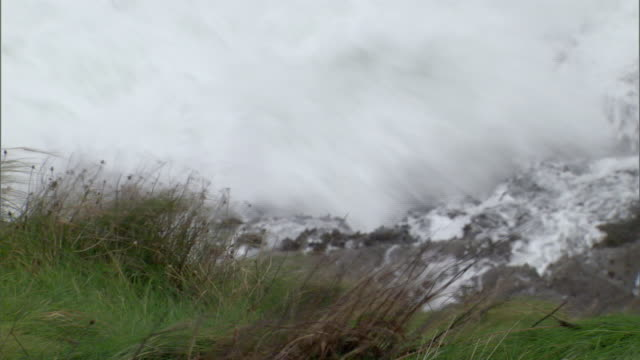 ms grass blowing in wind with waves crashing on rocks in background / county cork, munster, ireland - county cork stock videos & royalty-free footage