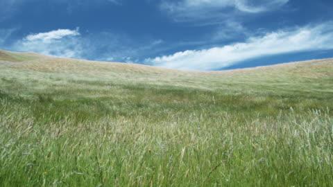 ws, grass blowing on wind, blenheim, marlborough, new zealand - grass点の映像素材/bロール