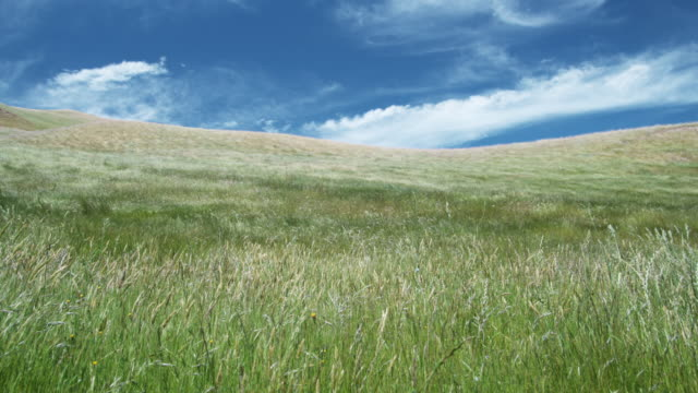 ws, grass blowing on wind, blenheim, marlborough, new zealand - meadow stock videos & royalty-free footage