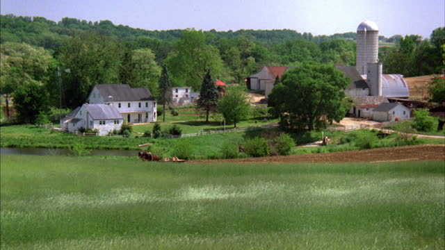 grass blows in front of white farm buildings. - amische stock-videos und b-roll-filmmaterial