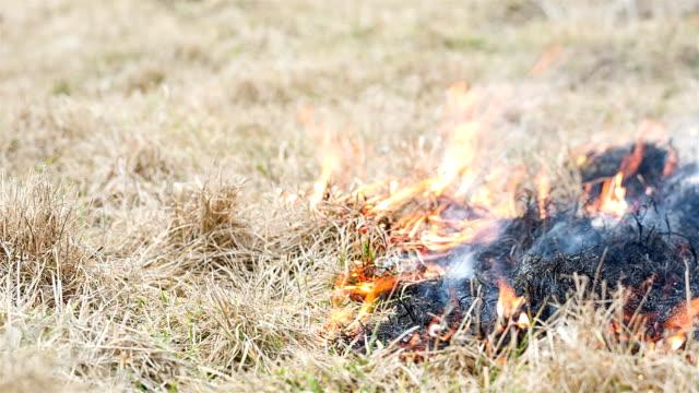 Gras Brennen in das Feld ein. Feuer sich nach der Brandstiftung.