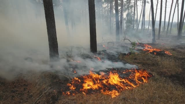 Grass burns in a section of forest in southern Brandenburg state on August 24 2018 near Klausdorf Germany A fire covering 400 hectares was as of the...