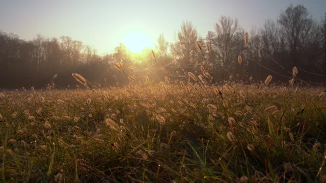 vidéos et rushes de ds herbe recouverte de gouttes de rosée - mouillé