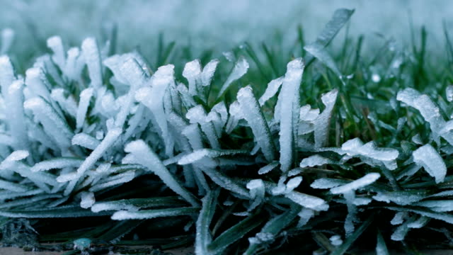 grass defrosting timelapse - frost stock videos & royalty-free footage