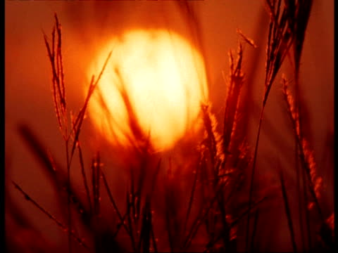 grass & dusk sun, texas, usa - controluce video stock e b–roll