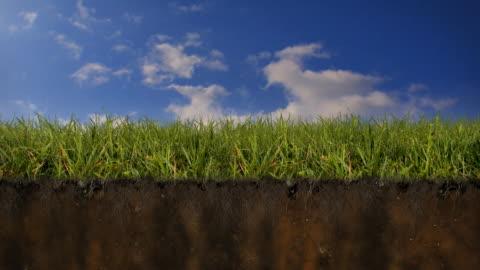vidéos et rushes de herbe de la terre coupe transversale - sol phénomène naturel