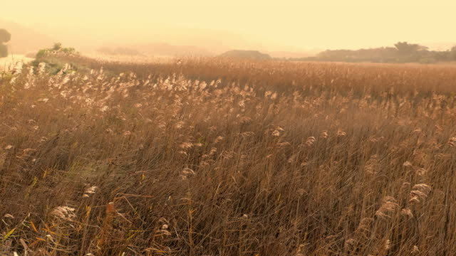 grass field in dawn - wildflower stock videos & royalty-free footage