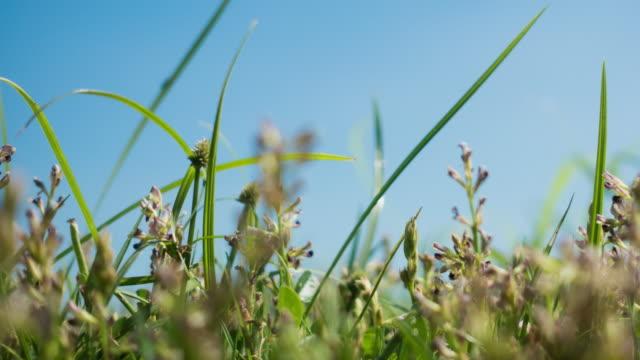 Grasveld onder zonlicht en de blauwe hemel