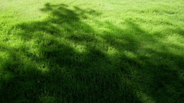 草畑 - blade of grass点の映像素材/bロール