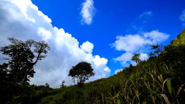 Campo di erba con il cloud